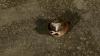 Алла Захаровна нашла мертвую крысу в багажнике